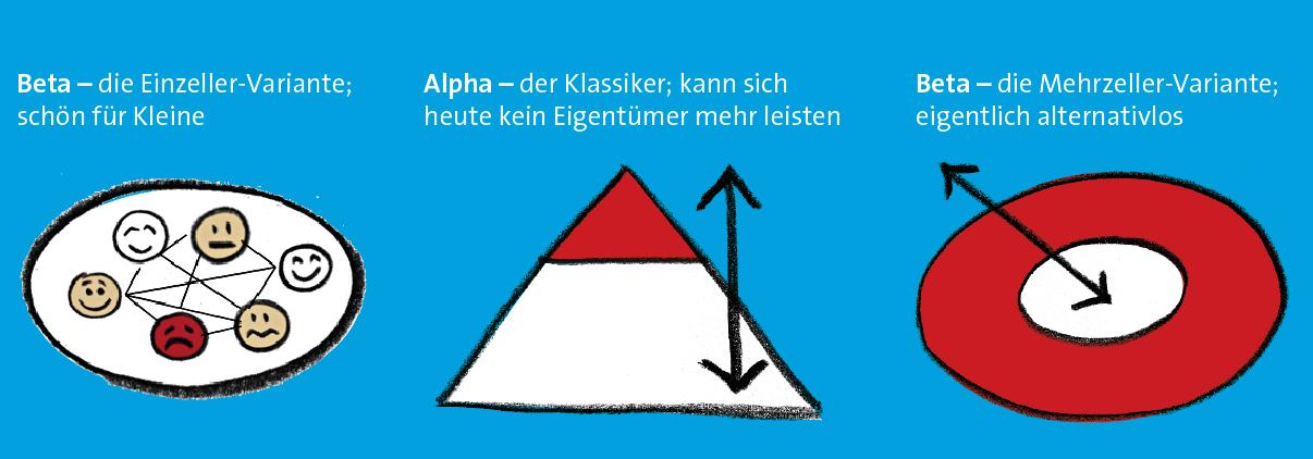 organisationsphysik